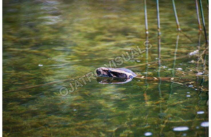 BUP Swim SWPT 100911 5