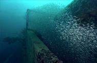Minnow Migrations
